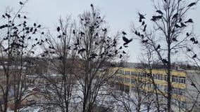 Molti corvi hanno volato negli alberi fotografia stock