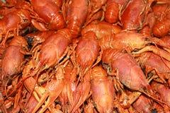 Molti crawfishes Fotografia Stock Libera da Diritti