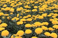 Molti fiori Immagini Stock