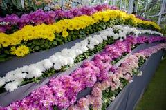 Molti fiori. Immagine Stock