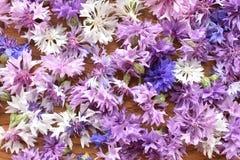 Molti fiori del bottone del celibe su legno fotografia stock libera da diritti