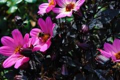 Molti fiori delle rose fotografia stock libera da diritti