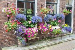 Molti fiori delle terraglie che appendono al muro di mattoni Fotografia Stock