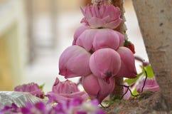 Molti fiori di Lotus Immagini Stock