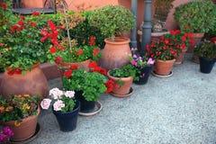 molti fiori in vasi da fiori alla via Fotografia Stock
