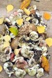 Molti funghi commestibili crudi sui bordi di legno marroni Immagini Stock