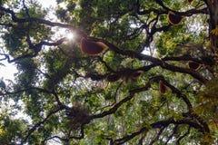 Molti funghi dell'albero su un grande albero fotografie stock libere da diritti