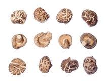 Molti funghi di shiitake Fotografie Stock
