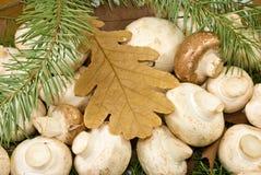 Molti funghi e foglie di autunno immagine stock libera da diritti