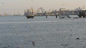 Molti gabbiani, anatre e cigni volanti davanti al petrolio e terminale e gru del gas video d archivio