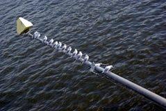 Molti gabbiani di mare Fotografia Stock