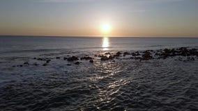 Molti gabbiani volare e giocare nel cielo al tramonto sul mare video d archivio
