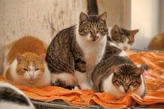 Molti gatti insieme Fotografie Stock Libere da Diritti