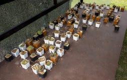 Molti generi di cactus hanno messo sopra il compensato Fotografia Stock