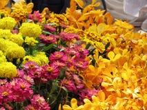 Molti generi di fiori variopinti decorano il giardino all'aperto fotografia stock