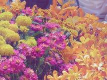 Molti generi di fiori variopinti decorano il giardino all'aperto fotografie stock