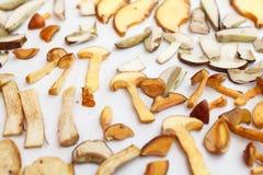 Molti generi di funghi della foresta fotografia stock libera da diritti