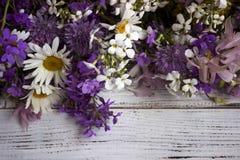 Molti generi differenti di fiori: flox, camomilla, peonia, campane fotografia stock libera da diritti