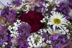Molti generi differenti di fiori: flox porpora e viola, camomilla, peonia rossa, campane rosa fotografie stock