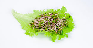 Molti germogli del ravanello sulla foglia verde della lattuga Fotografie Stock