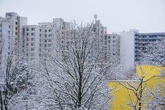 Molti nevicano alberi con molte grandi costruzioni ai precedenti Fotografie Stock