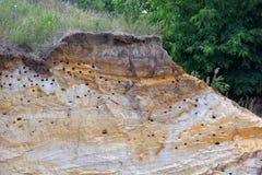 Molti nidi dei sorsi nel canyon sotto forma di depres Immagini Stock
