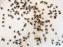 Molti parecchi morti pilotano la trappola di carta presa della mosca appiccicosa Fotografia Stock Libera da Diritti