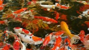 Molti pesci della schifezza di immaginazione che nuotano nell'acqua molto pulita e chiara