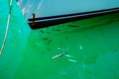 Molti pesci nell'acqua di mare vicino al ` s della barca imbarcano Fotografie Stock Libere da Diritti