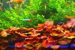 Molti pesci sui precedenti delle alghe fotografie stock libere da diritti