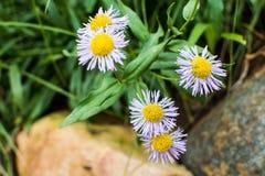 Molti piccoli fiori Immagini Stock Libere da Diritti