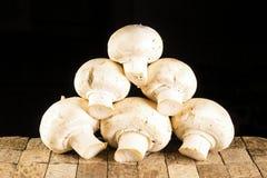 Molti piccoli funghi prataioli bianchi non sbucciati crudi Fotografia Stock