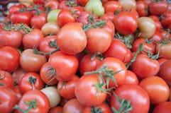 Molti pomodori Fotografia Stock