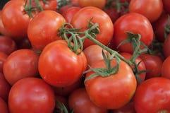 Molti pomodori Fotografia Stock Libera da Diritti