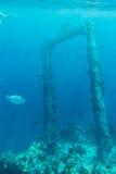 Molti raggi di sole subacquei Fotografia Stock Libera da Diritti