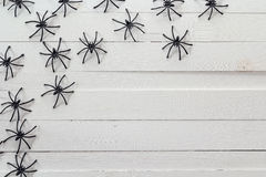 Molti ragni neri sui bordi di legno bianchi Fondo per l'ha Fotografia Stock