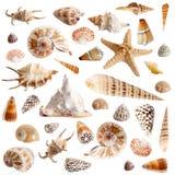 Molti seashells Fotografia Stock Libera da Diritti