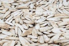 Molti semi di girasole arrostiti bianchi con le spezie ed il primo piano del sale immagini stock