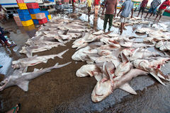 Molti squali morti sulla terra Servizio di pesci a Hong Kong Immagini Stock Libere da Diritti