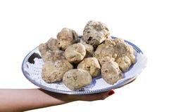 Molti tartufi bianchi da Piemonte sul vassoio d'acciaio Fotografia Stock Libera da Diritti