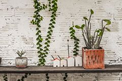 Molti tipi di vasi della pianta compreso i modelli della casa disposti sugli scaffali fatti di vecchio legno immagine stock
