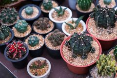 Molti tipo di cactus in vaso fotografia stock