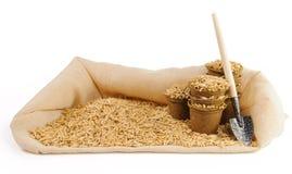 Molti vasi della torba con i semi dell'avena e poca cazzuola di giardinaggio Fotografie Stock Libere da Diritti