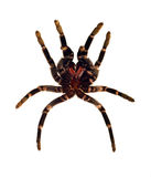 Molting spider Stock Image
