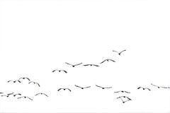 Moltitudine che vola al sole (isolato). Immagini Stock Libere da Diritti