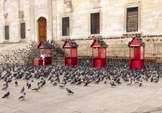 Moltitudine del piccione Immagini Stock Libere da Diritti