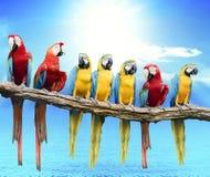 Moltitudine di ara gialla rossa e blu che purching sul ramo di albero asciutto i fotografia stock libera da diritti