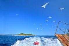 Moltitudine di gabbiani che trascinano la barca turistica, Skiathos, Grecia Fotografia Stock Libera da Diritti