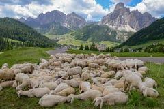 Moltitudine di pecore a Corvara in Badia su Badia nelle dolomia Fotografia Stock Libera da Diritti