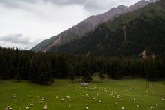 Moltitudine di pecore o di capre Immagini Stock Libere da Diritti